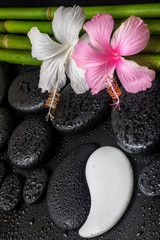 spa concept of white, pink hibiscus flower, symbol Yin Yang  and