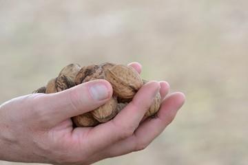 Poignée de noix