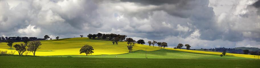 Sunnyside Cowra Landscape Canola Views