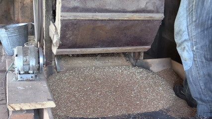 grain fall from sifting machine and farmer man turn handle