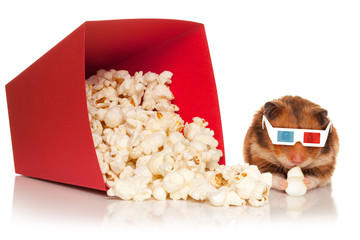 Hamster in 3d glasses chewing popcorn.