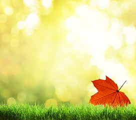 green grass and autumn background