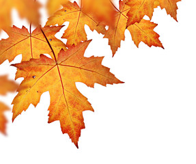 Orange fall leaves border, isolated on a white background