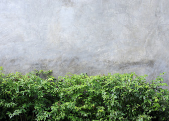 cement wall textured background with green leaf