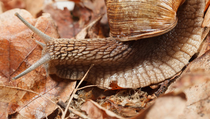Garden snail in autumn