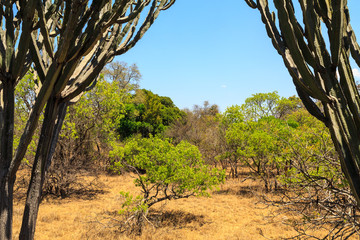 Landscape of African bush in summer