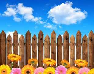 Gerberas in the background wooden fence