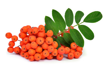 Orange rowan with leaf