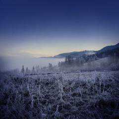 fogy winter morning