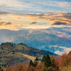 pine trees near valley in mountains  on hillside at sunrise