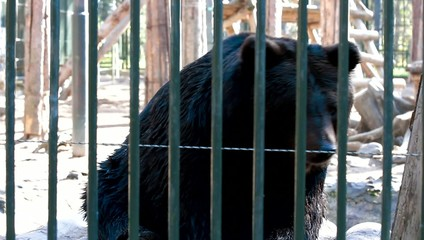 bear in a zoo behind bars