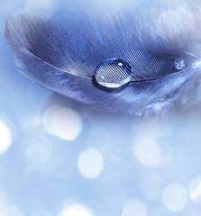 feathers with rain drop macro
