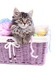 Funny gray kitten and balls of thread in wicker basket,