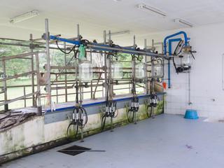 milking machine in farm