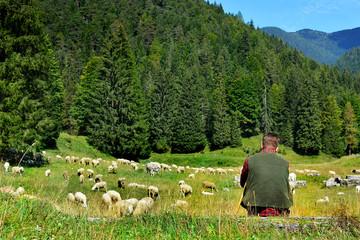 giovane pastore con il gregge al pascolo