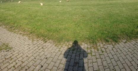 Schatten und Elbdeich