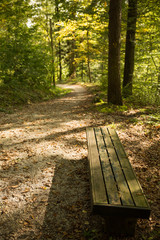 Bench in the woods