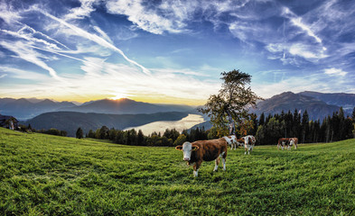Lake Millstatt Herd Of Cows Sunset