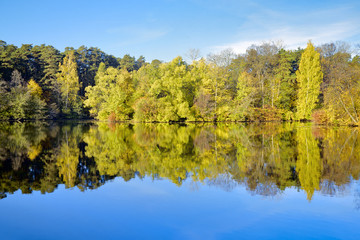 Trees on the shore of lake in autumn