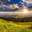 pine trees near valley in mountains  on hillside on sunset