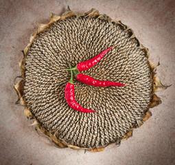 chili & sunflower