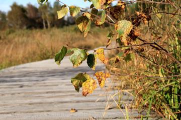 Holzpfad in Herbststimmung