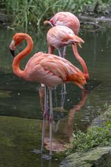 Row of Flamingos