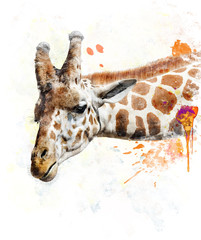 Watercolor Image Of Giraffe