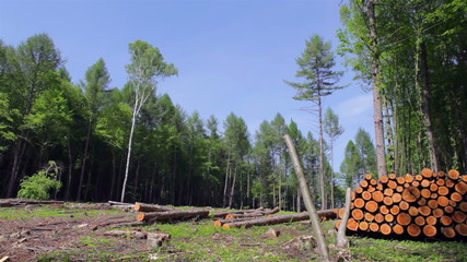 Deforestation in the taiga