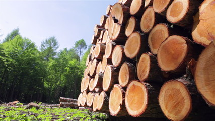 Softwood Forestry