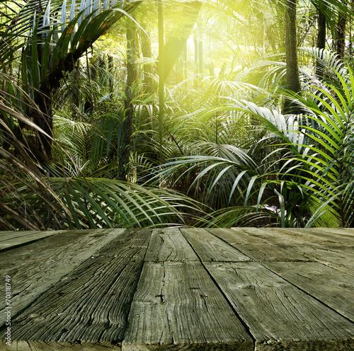 Forest © Stillfx