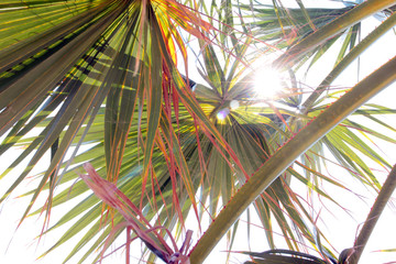 beautiful palm branches and sunny sky