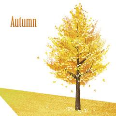 イチョウ 木 秋 紅葉 Gingko with golden leaves in late autumn
