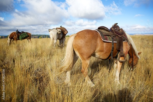 Foto op Canvas Paarden Horses on the Ridge