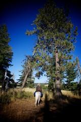 Under the Pine