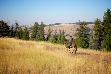 Riding Horses to Hunt