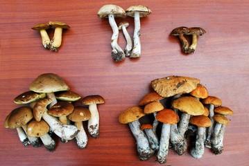 Leccinum scabrum, Boletus edulis, Leccinum