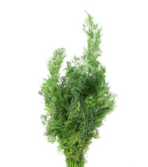 Close up of fresh dill.