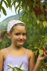 Girl picks peaches