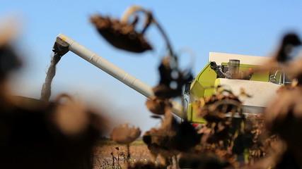 Combine Harvester Working in The Field