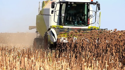 Combine Harvester and sunflower
