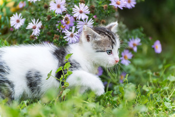 Small funny kitten in pink  flowers
