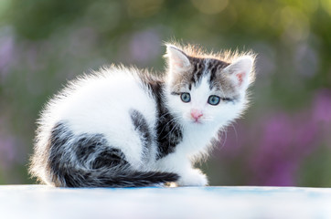 Funny kitten sitting outdoors in park