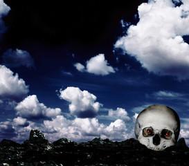 Skull on the ground