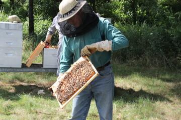 abeilles et apiculteur