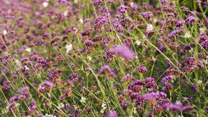 Violette Blume 02
