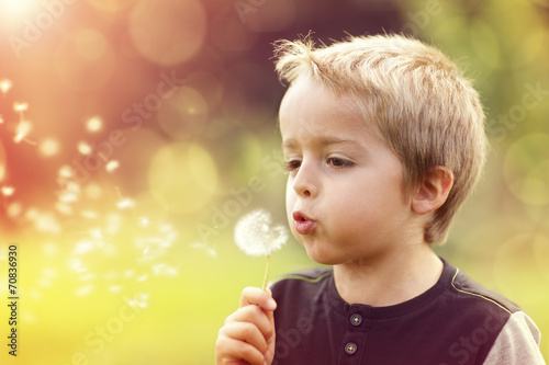 canvas print picture Dandelion wishes