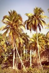 Cuba nature. Cross processed retro color.