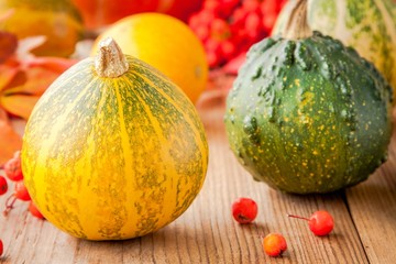 decorative colored mini pumpkins