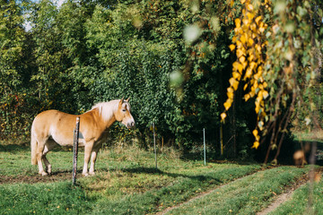 Fenced Horse standing on a meadow
